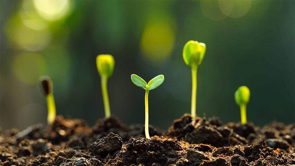 leurs, arbustes, plantes condimentaires et semences